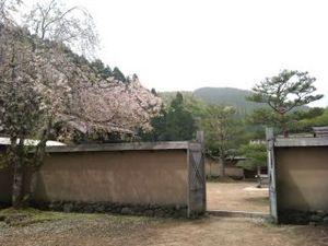 2011050204_ichijyoudaniasakuraato_3